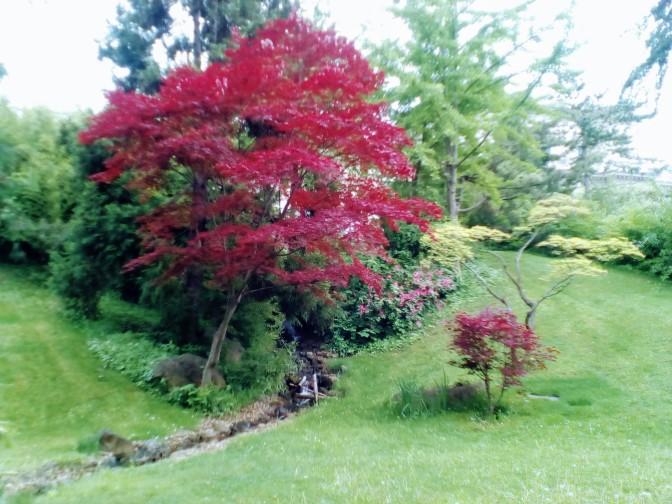 Un particular jardín Japonés y el modo en el que observador entiende el arte contemporáneo.